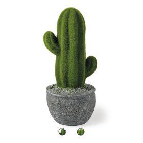 Cactus da giardino